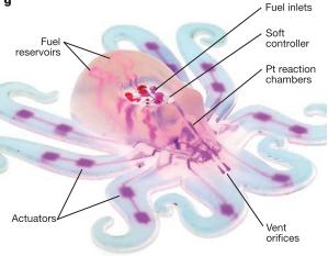 Soft Robotic Octopus